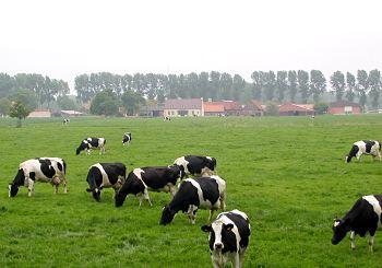 cowfarmopt